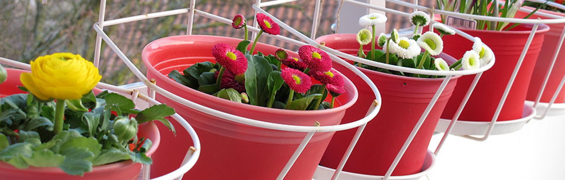 Een Plantenbak Ophangen Op Het Balkon